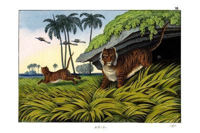 Tiger, 1860--Giclee Print