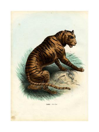https://imgc.artprintimages.com/img/print/tiger-1863-79_u-l-purkvm0.jpg?p=0