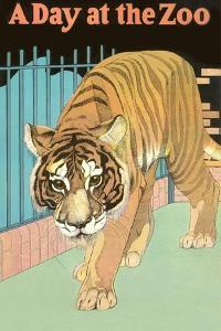 Tiger, a Day at the Zoo