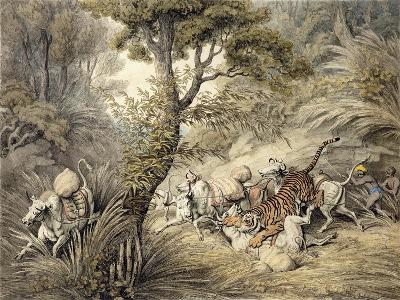 Tiger Attacking a Cattle Train-Samuel Howitt-Giclee Print