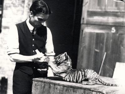 Tiger Cub Being Fed by Keeper Harry Warwick, 1914-Frederick William Bond-Photographic Print