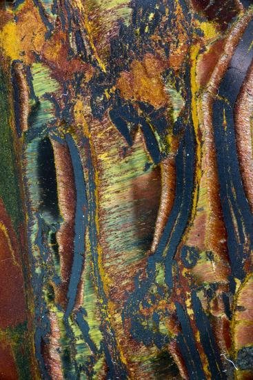 Tiger Eye-Darrell Gulin-Photographic Print