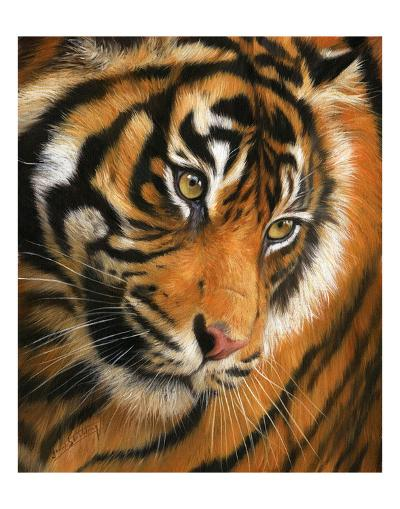 Tiger Face Portrait-David Stribbling-Art Print