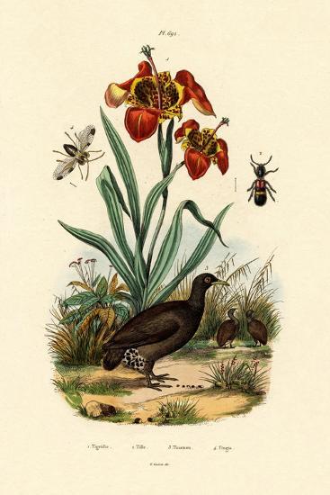 Tiger Flower, 1833-39--Giclee Print