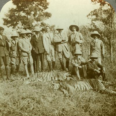 Tiger Hunting, Cooch Behar, West Bengal, India, C1900s-Underwood & Underwood-Photographic Print
