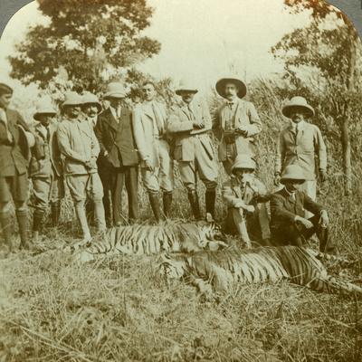 https://imgc.artprintimages.com/img/print/tiger-hunting-cooch-behar-west-bengal-india-c1900s_u-l-q10lvix0.jpg?p=0