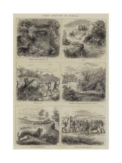 Tiger Hunting in Bengal--Giclee Print