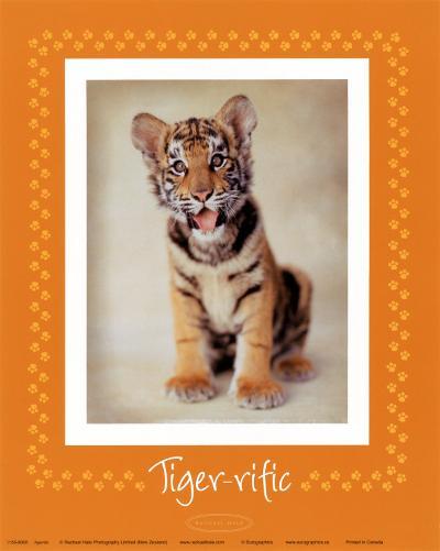 Tiger-ific-Rachael Hale-Art Print