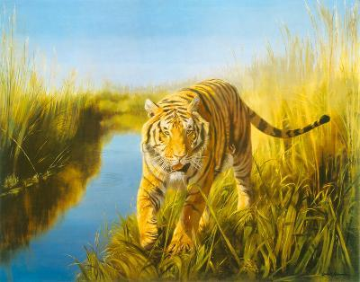 Tiger In The Indian Sunderbans-Leonard Pearman-Giclee Print