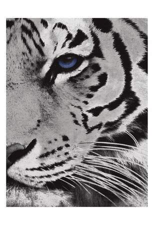 https://imgc.artprintimages.com/img/print/tiger-purple-eye-mate_u-l-f9a4yz0.jpg?p=0