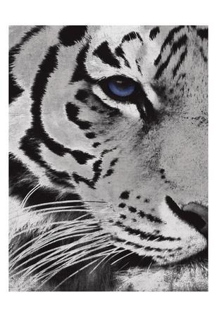 https://imgc.artprintimages.com/img/print/tiger-purple-eye_u-l-f9a4yy0.jpg?p=0