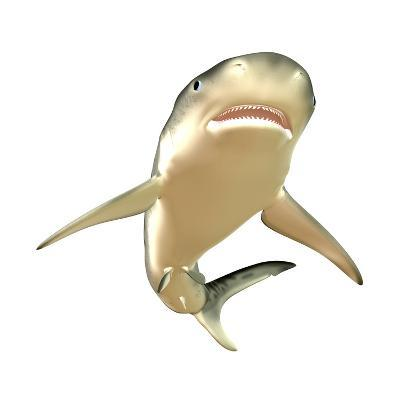 Tiger Shark--Art Print