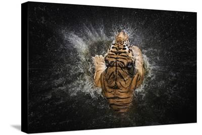 Tiger Splash-Win Leslee-Stretched Canvas Print