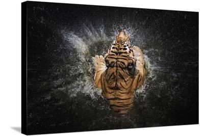 Tiger Splash-Win Leslee-Stretched Canvas Print