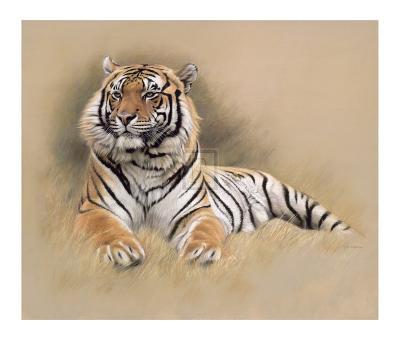 Tiger-Gary Stinton-Collectable Print