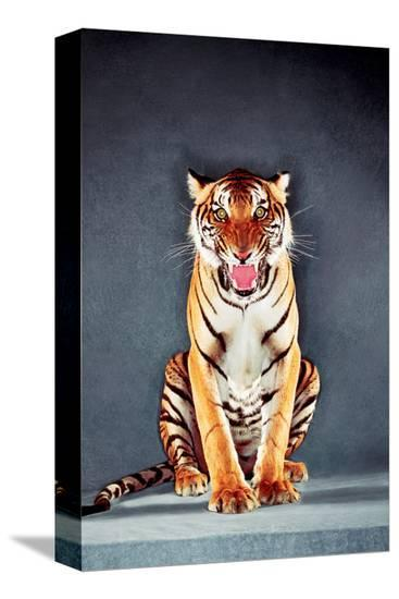 Tiger--Stretched Canvas Print