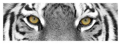 Tiger-PhotoINC Studio-Art Print