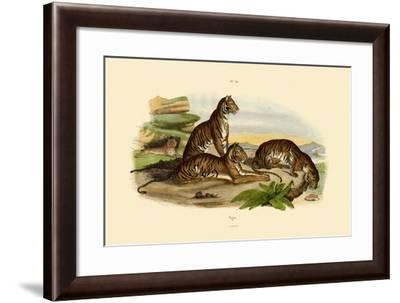 Tigers, 1833-39--Framed Giclee Print