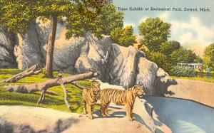 Tigers in Zoo, Detroit, Michigan