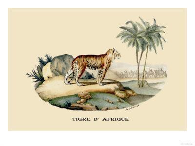 https://imgc.artprintimages.com/img/print/tigre-d-afrique_u-l-p2c6wa0.jpg?p=0