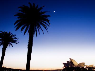 Sydney Opera House at Dawn with Trees in Silhouette