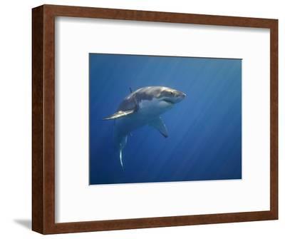 Shark in Open Water