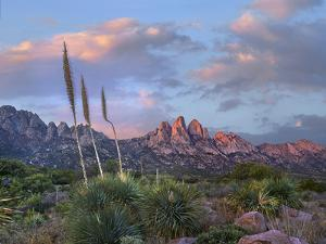 Agave and Organ Mountains, Aguirre Springs, New Mexico by Tim Fitzharris