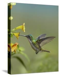 Hummingbirds Canvas Art Prints Paintings Posters Wall Art Art Com