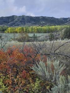 Autumn Foliage in the North Unit, Theodore Roosevelt National Park, North Dakota by Tim Fitzharris