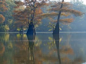 Bald Cypress trees submerged in water, White River National Wildlife Refuge, Arkansas. by Tim Fitzharris
