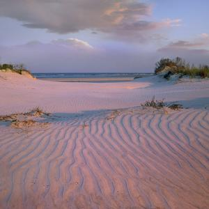 Beach at Little Talbot State Park, Little Talbot Island, Florida, Usa by Tim Fitzharris