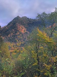 Chimney Tops, Great Smokey Mountains National Park, Tennessee, Usa by Tim Fitzharris