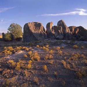City of Rocks State Park, New Mexico, Usa by Tim Fitzharris