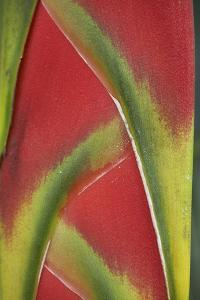 Close-Up of Heliconia, Costa Rica by Tim Fitzharris