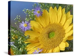 Common Sunflower and Asters, North America by Tim Fitzharris