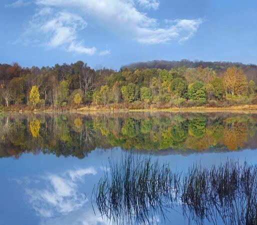 tim-fitzharris-deciduous-forest-along-lackawanna-lake-ricketts-glen-state-park-pennsylvania