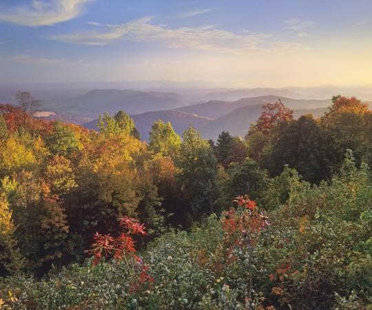 tim-fitzharris-deciduous-forest-in-autumn-blue-ridge-mountains-from-doughton-park-north-carolina