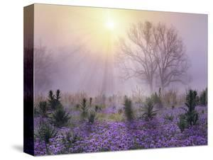 Beautiful Texas State Parks canvas artwork for sale, Posters and