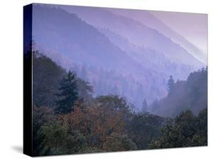 Great Smoky Mountains National Park Near Newfound Gap, Tennessee, Usa by Tim Fitzharris