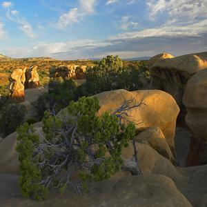 Hoodoo Formations in Devil's Garden, Escalante National Monument, Utah by Tim Fitzharris