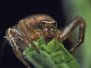 Jumping Spider, New Mexico by Tim Fitzharris