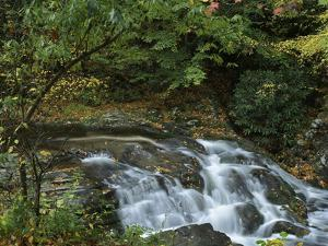 Laurel Creek Cascades, Great Smoky Mountains National Park, Tennessee, Usa by Tim Fitzharris