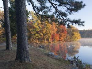 Loblolly pine on Lake Bailey, Petit Jean State Park, Arkansas by Tim Fitzharris