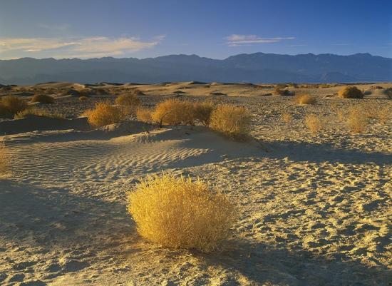 tim-fitzharris-mesquite-flat-sand-dunes-death-valley-national-park-california