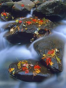 Autumn Leaves on Wet Boulders in Stream, Great Smoky Mountains National Park, North Carolina by Tim Fitzharris/Minden Pictures