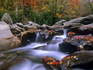 Little Pigeon River Among Rocks and Maple Leaves, Great Smoky Mountains Nat'l Park, Tennessee by Tim Fitzharris/Minden Pictures