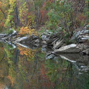 Oak-hickory forest along Lee Creek, Devil's Den, Arkansas, USA by Tim Fitzharris
