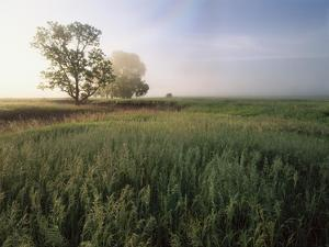 Oak trees shrouded in fog, Flint Hills, Kansas by Tim Fitzharris