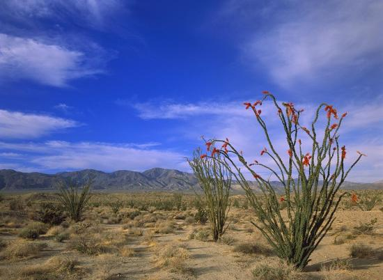 tim-fitzharris-ocotillo-and-the-vallecito-mountains-anza-borrego-desert-state-park-california