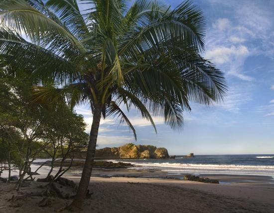 tim-fitzharris-palm-trees-line-pelada-beach-costa-rica
